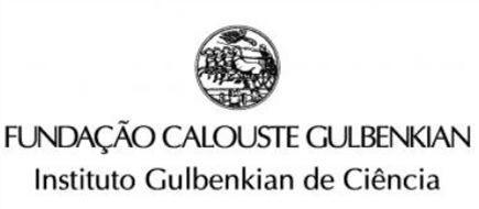Instituto Gulbenkian de Ciência Instituto Gulbenkian faz descoberta no estudo do cancro